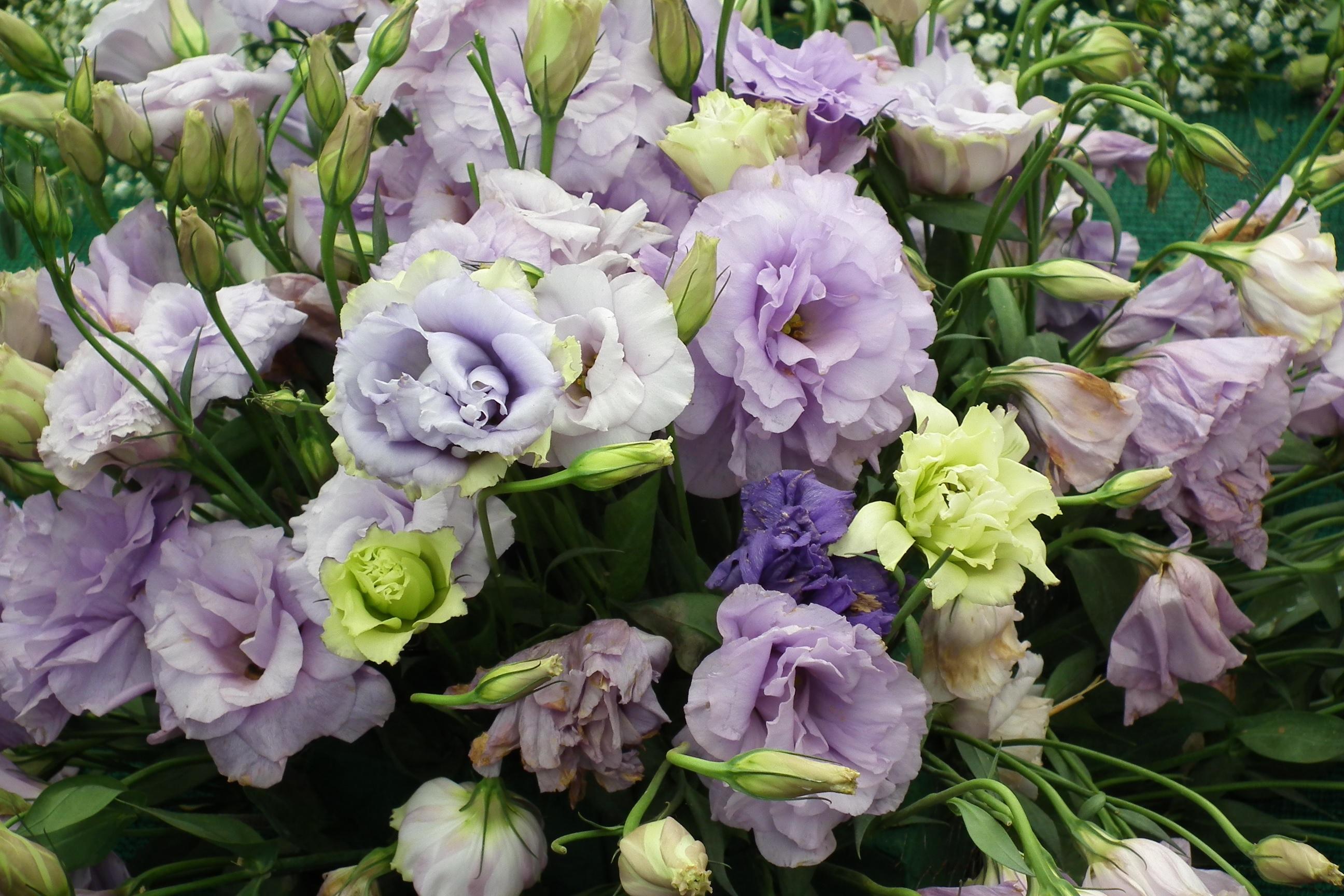 Букет разноцветных цветов лизиантуса