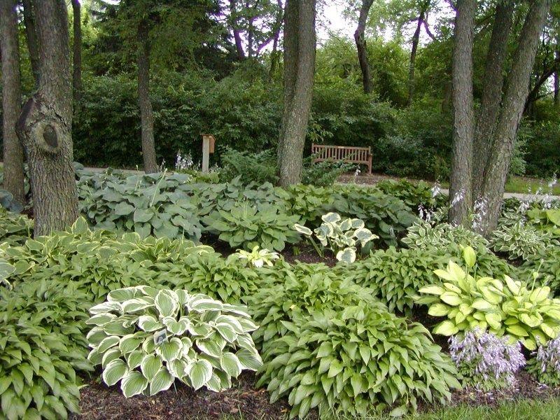 Цветы и растения в тени