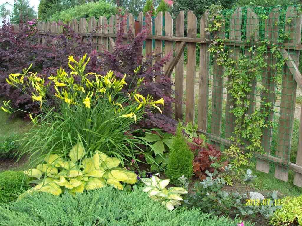 Хоста в композиции с другими растениями