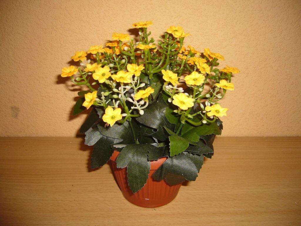 Яркие желтые цветки