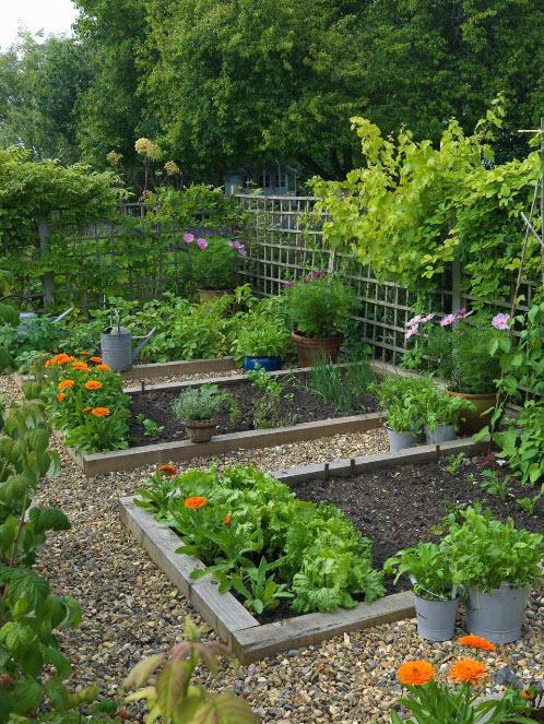 Клумбы в саду-огороде