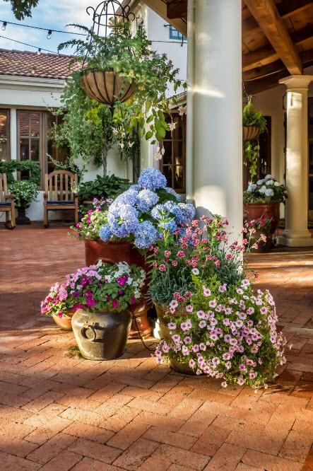 Горшки и кадки с цветами