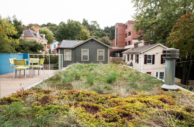 Растительность на покрытии дома
