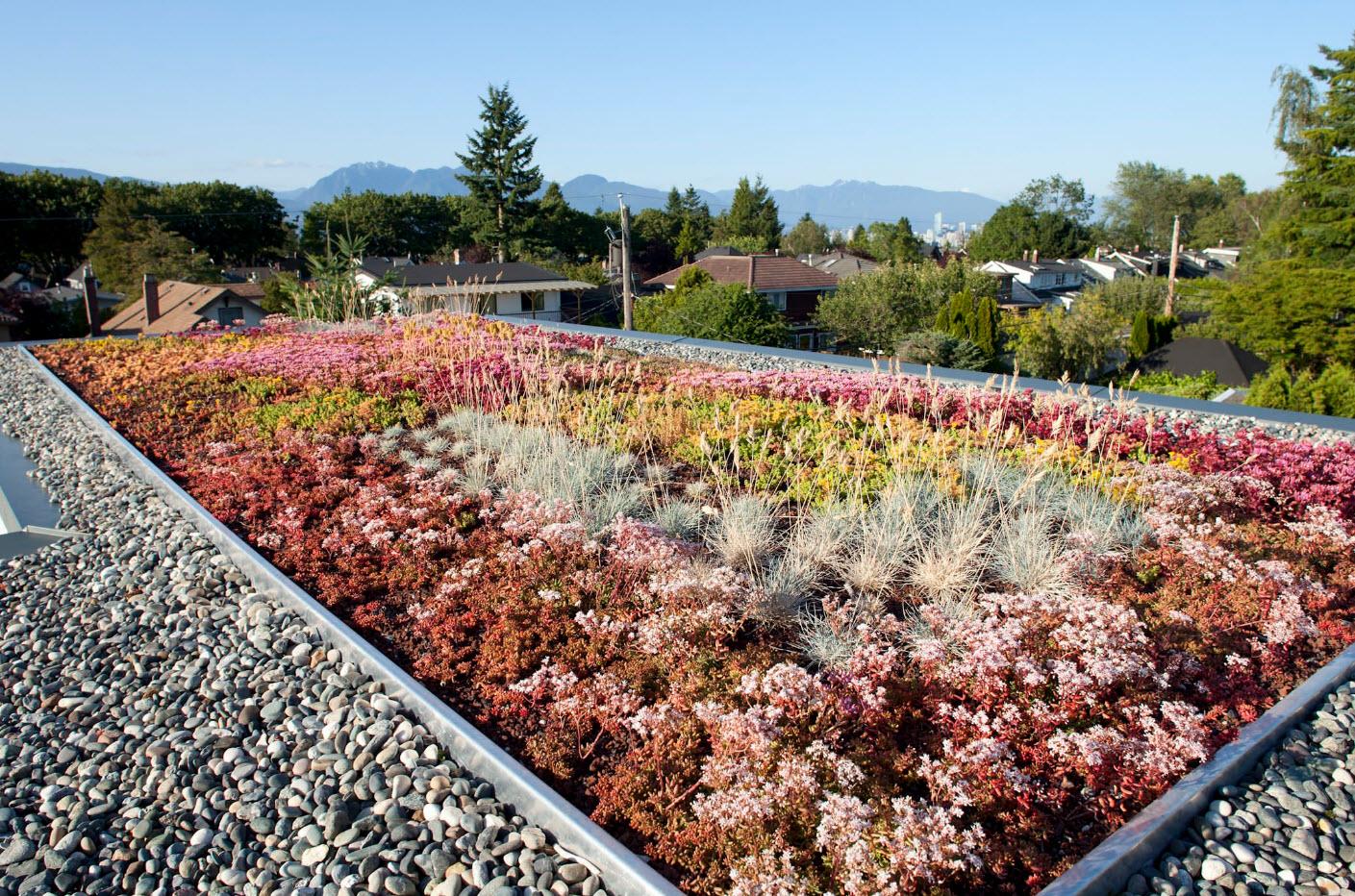 Ландшафтный дизайн на крыше