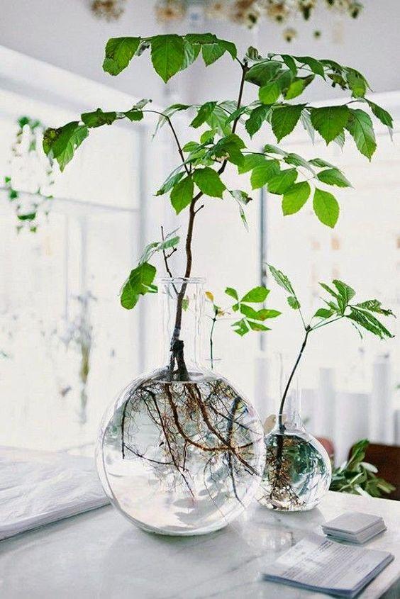 Растения в прозрачных сосудах