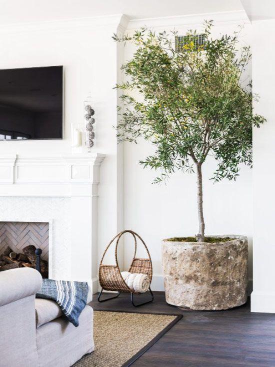 Огромное дерево в гостиной