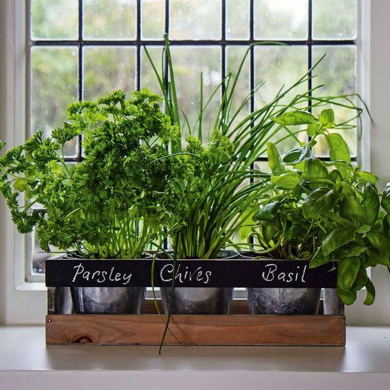 Полезные растения выращивание дома 36