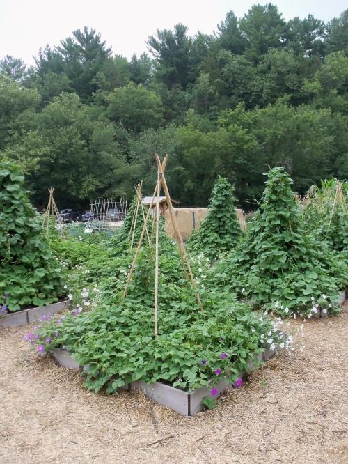 Для плетущихся растений