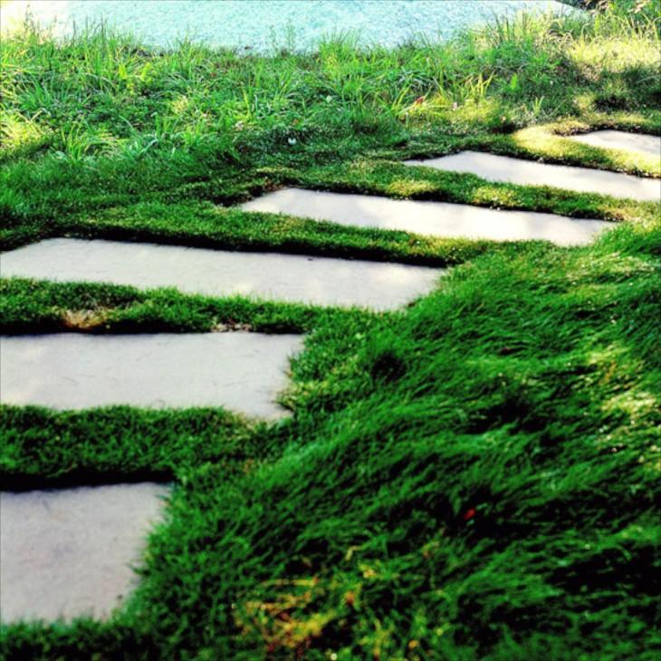 Яркая газонная трава