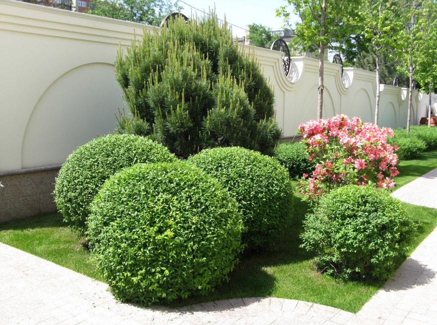 Растения и геометрия