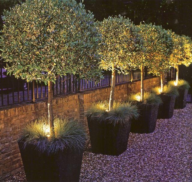 Деревья с подсветкой