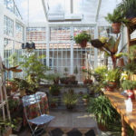 Зимний сад: 100 современных идей создания оранжереи