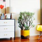 Покраска стен в квартире: тонкости отделки и креативные дизайн-приемы