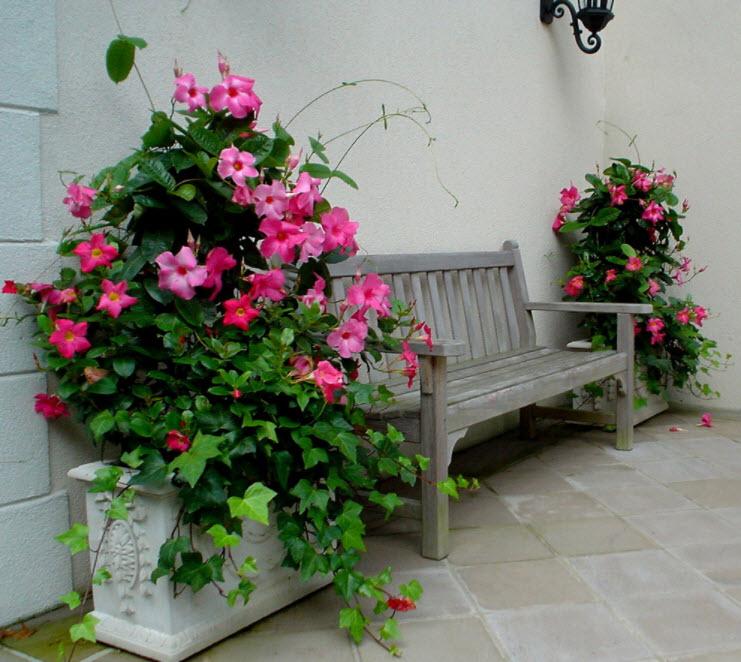 скамейка возле розовых цветов