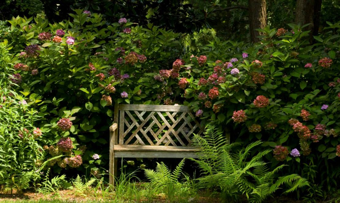скамейка у цветов