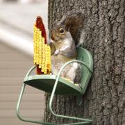 украшения для сада: кормушка для белки