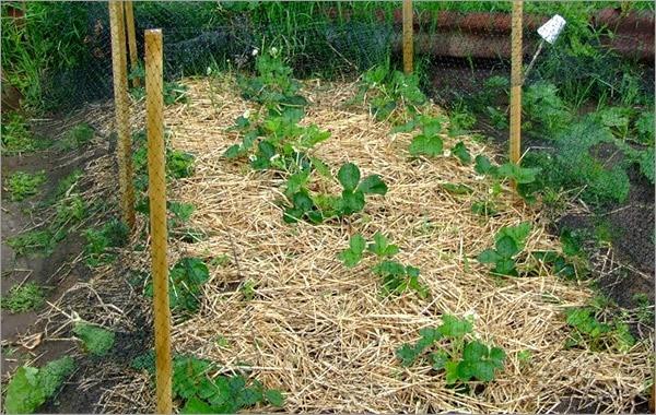 Новости PRO Ремонт - Как оформить грядки на даче и вырастить хороший урожай 13