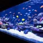 Как сделать аквариум своими руками? Пошаговые мастер-классы и рекомендации по оформлению