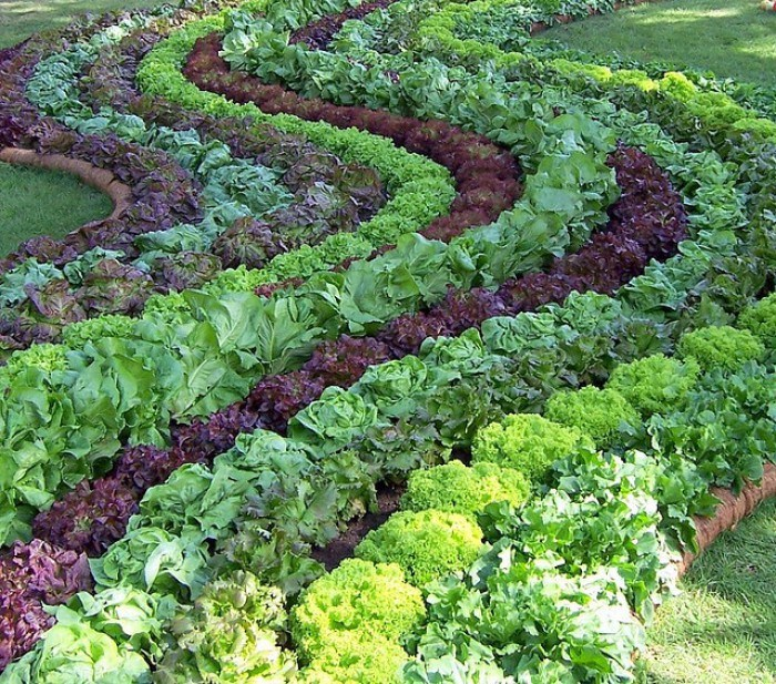 Новости PRO Ремонт - Как оформить грядки на даче и вырастить хороший урожай 40