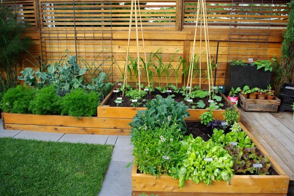 Новости PRO Ремонт - Как оформить грядки на даче и вырастить хороший урожай 44