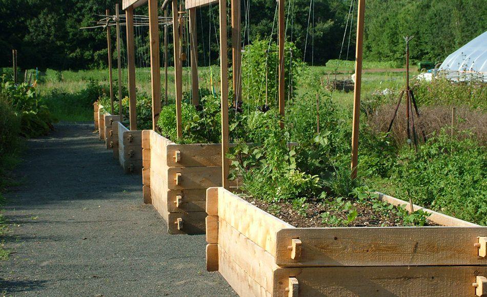 Новости PRO Ремонт - Как оформить грядки на даче и вырастить хороший урожай 74