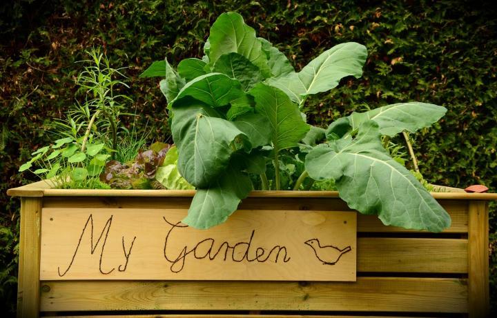 Новости PRO Ремонт - Как оформить грядки на даче и вырастить хороший урожай 79