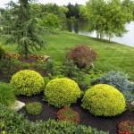 В соседстве декоративных кустарников