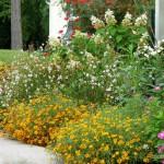 Цветник на даче – теплый и уютный уголок