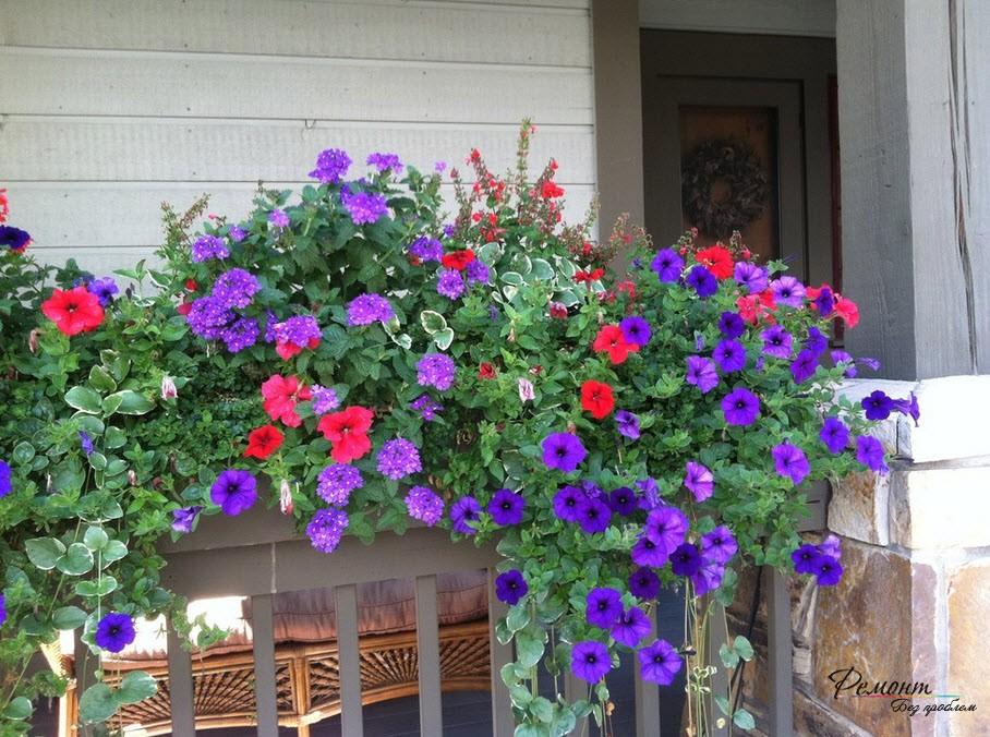Оформление цветника на заборе