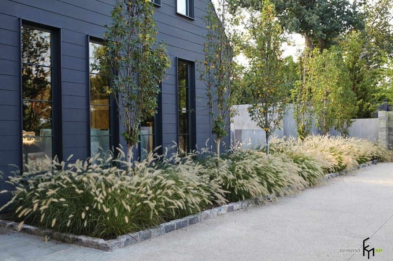 Растения для загородного дома