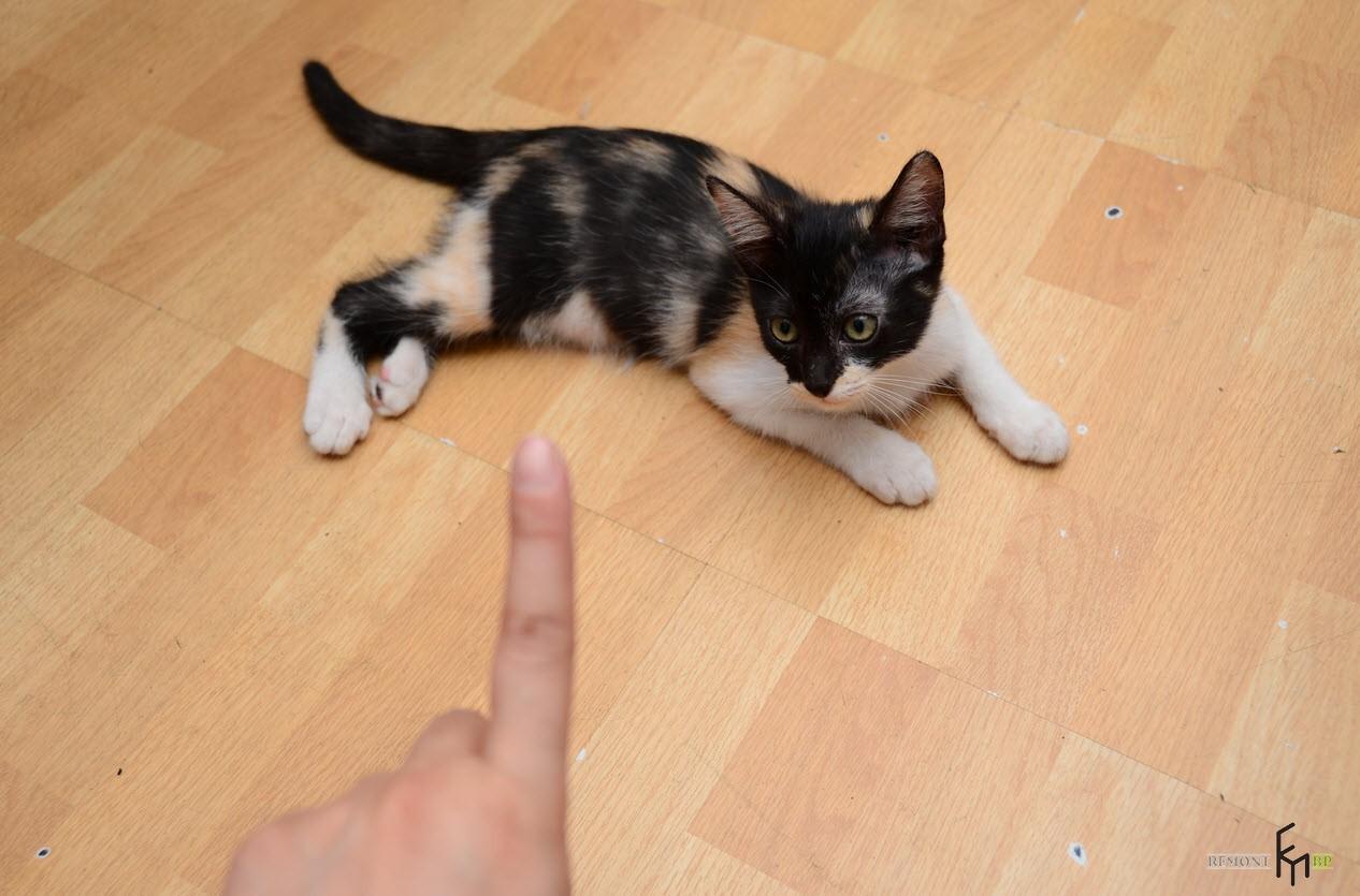 Котенок смотрит на палец