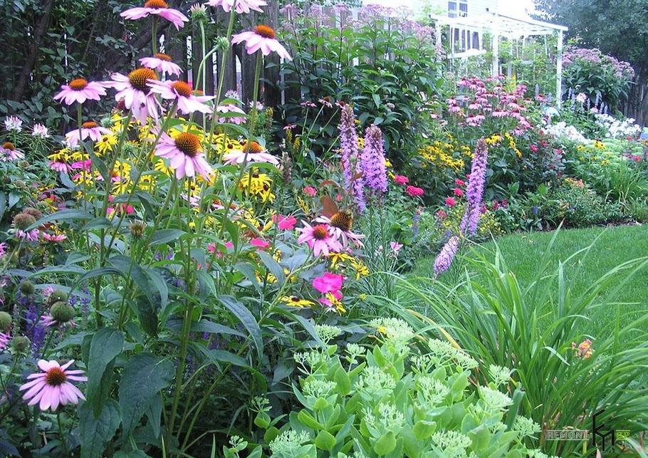 Растения на дачном участке создают тепло и уют
