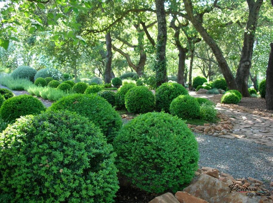Виды декоративных кустарников фото и названия