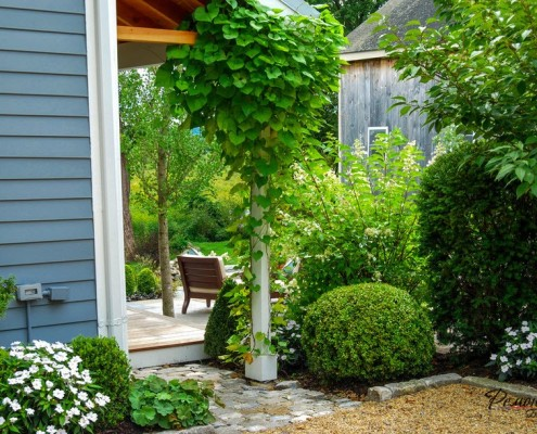 вьющиеся растения у дома