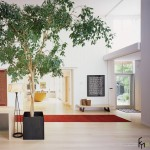 Комнатные деревья – оазис в городской квартире