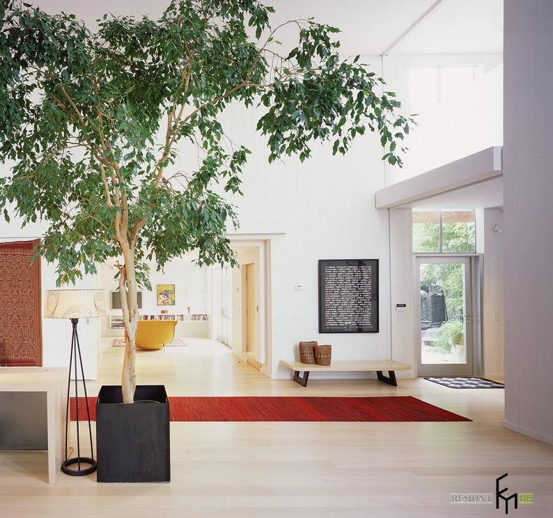 Комнатные деревья – оазис в городской