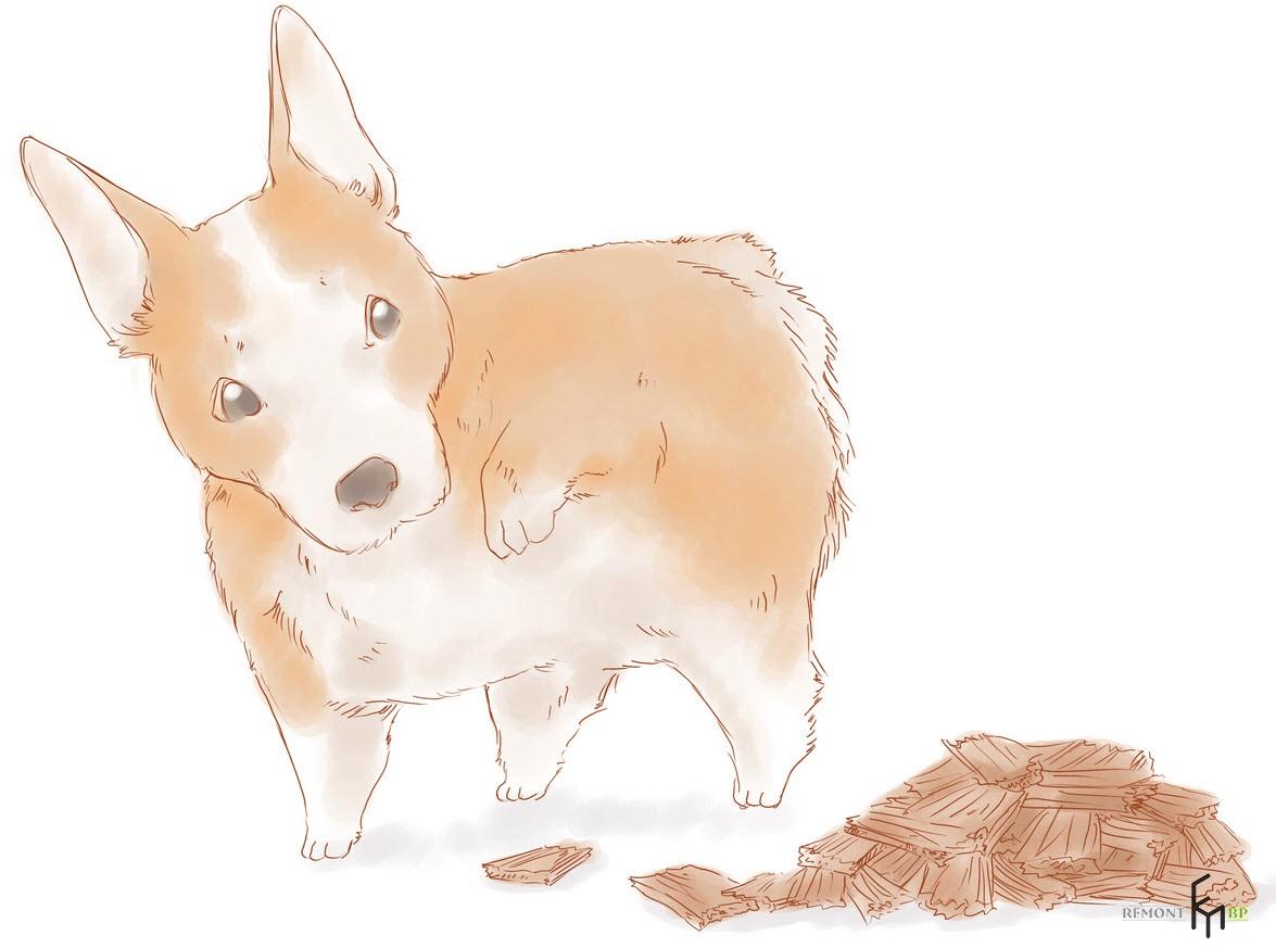 Важно убедиться, что у собаки нет аллергии на кедр