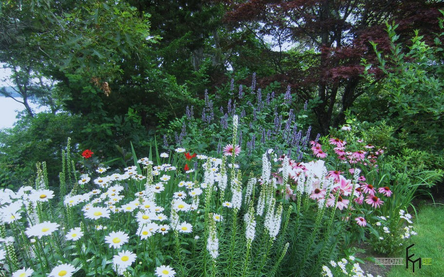 Цветник на даче: нюансы оформление, комбинирование цветов на фото