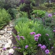 Растения вдоль сухого ручья